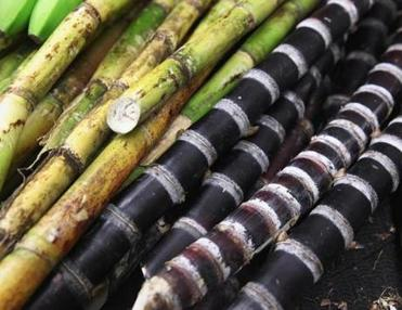 Tropical Foods boasts hard-to-find products such as sugarcane.